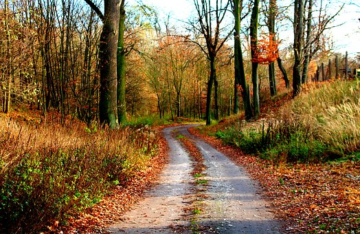 Autumn, Forest, Way, Spacer, Autumn Weather, The Path