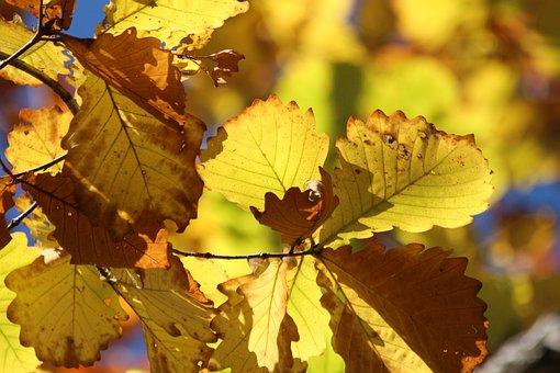 Sheet, Yellow Leaves, Autumn, Nature, Season, Mood