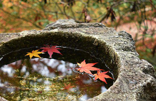 Autumn, Maple, Autumnal Leaves, Kaede, Natural, Japan