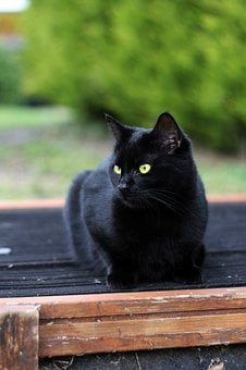 Black Cat, Cat, Black, Animal, Pet, Dark, Kitten