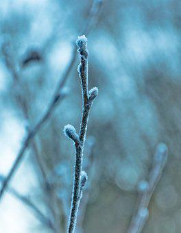 Stick, Frozen, Cold, Winter, Blue, Snow, Ice, Nature