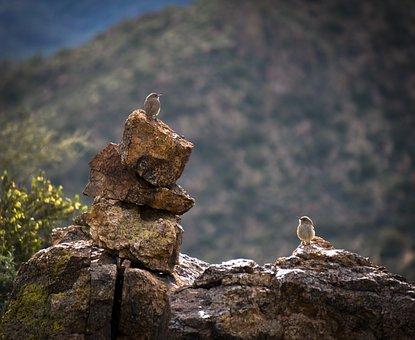 Bushtit, Rocks, Desert, Birds, Wildlife, Outdoors