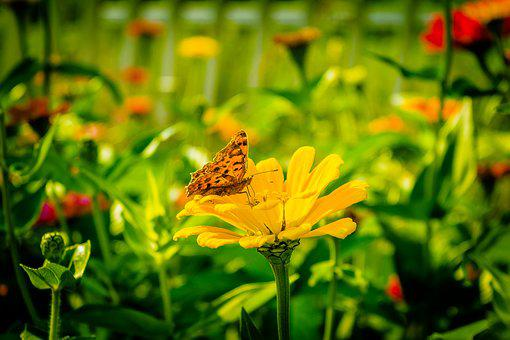 Butterfly, Flowers, Yellow, Summer, Close, Garden