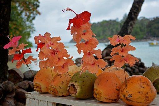 Coconuts, Tropics, Paradise, Coconut, Beach, Tropical