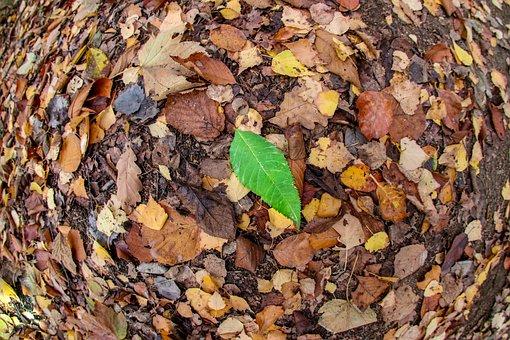 Leaf, Autumn, Fall Foliage, Green, Colorful, Nature