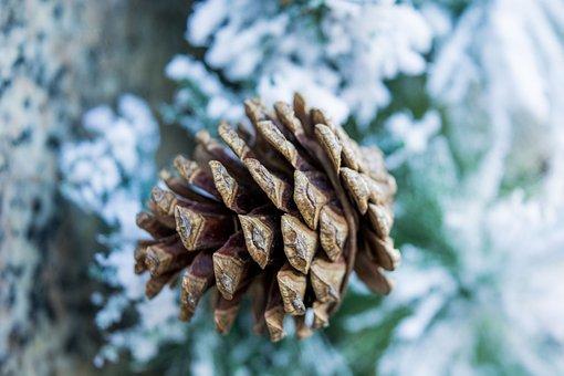 Cones, Spruce, New, Year, Tkjxrf