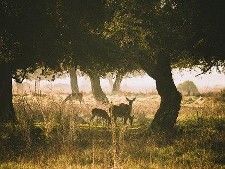 Roe Deer, Fog, Landscape, Deer, Lighting, Beautiful