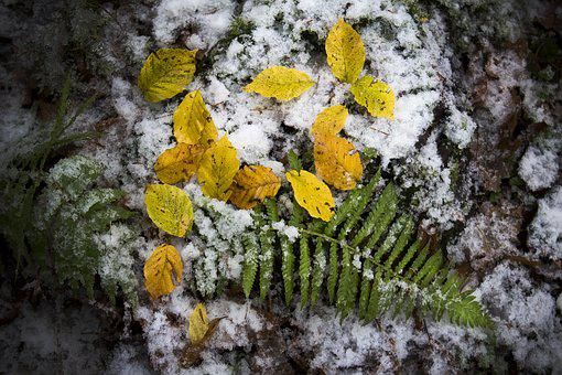 Fern, Fall Leaves, Forest, Golden, Nature, Transition