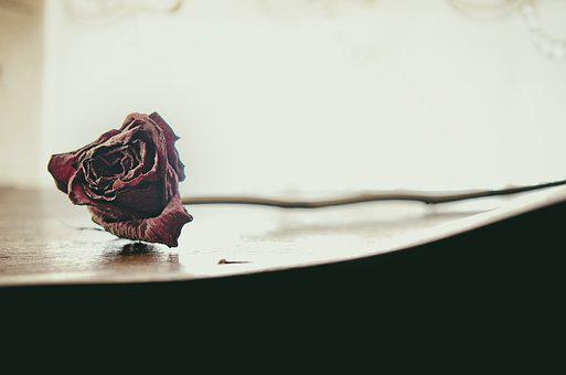 Flower, Death, Dry, Nature