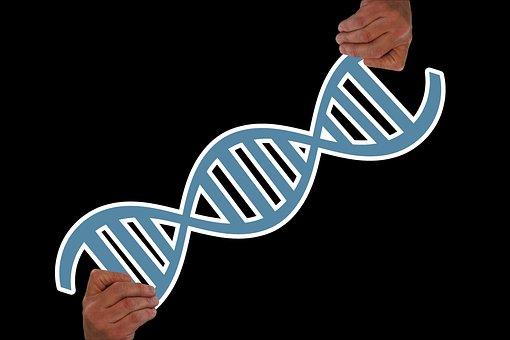 Hand, Keep, Deoxyribonucleic Acid, Graphic, Dna
