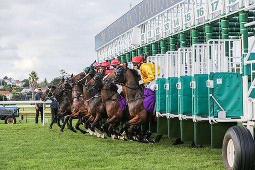 Horse, Racing, Horse Racing