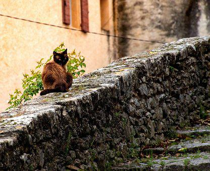 Cat, Kitty, Feline, Tomcat, Alley Cat, Cobbled Wall