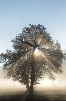 Sunbeam, Light Beam, Backlighting, Mystical, Nature