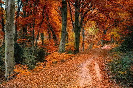 Autumn, Away, Leaves, Colorful, Nature, Forest