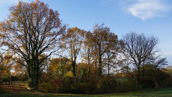 Autumn, Trees, Colorful, Fall Color, Nature, Landscape