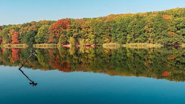 Autumn, Lake, Water, Cormorant, Forest, Nature