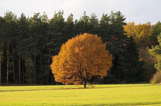 Tree, Autumn, Color, Nature, Landscape, Mood, Orange