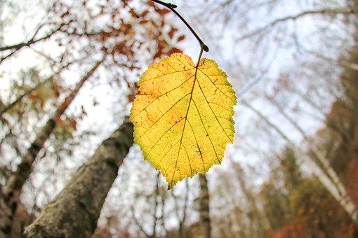 Autumn, Season, Leaf, Yellow, Nature, Plant, Tree