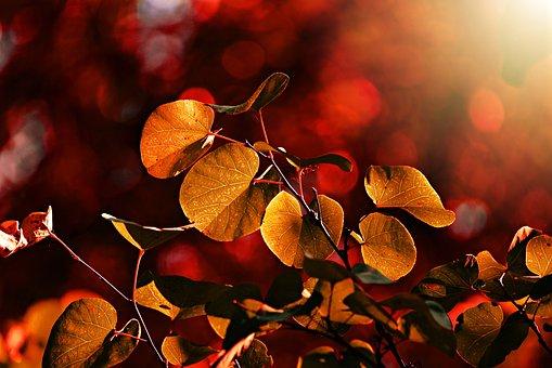 Leaf, Vein, Pattern, Twig, Bush, Foliage, Autumn Color