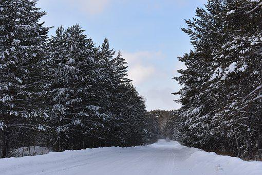 Winter, Snow, Forest, Road, Pine, Siberia, Frost, Cold