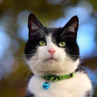 Cat, Animal, Mammal, Feline, Portrait, Face, Eye, Nose