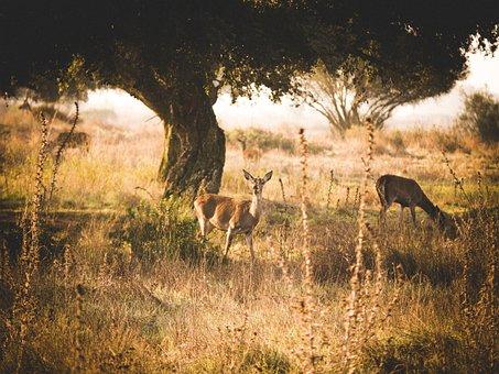 Roe Deer, Fog, Mood, Landscape, Deer, Lighting, Nature