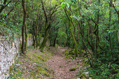 Path, Forest, Trees, Landscape, Forests, Nature, Scenic
