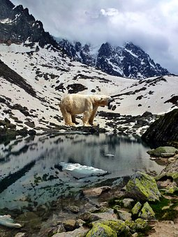 Bear, Nature, Mountain, Snow, Water, Wild, Predator