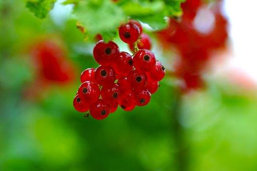 Currants, Red, Food, Summer, Taste, Fruit, Healthy