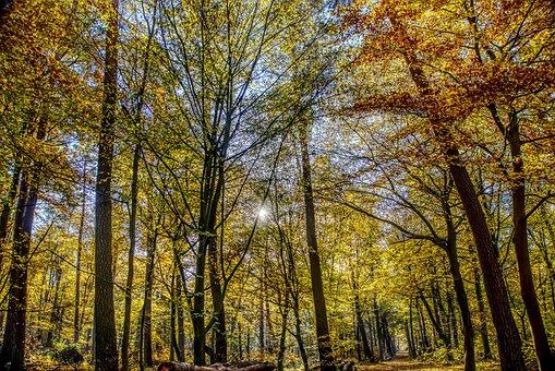 Forest, Autumn, Mood, Backlighting, Dazzling Star, Tree