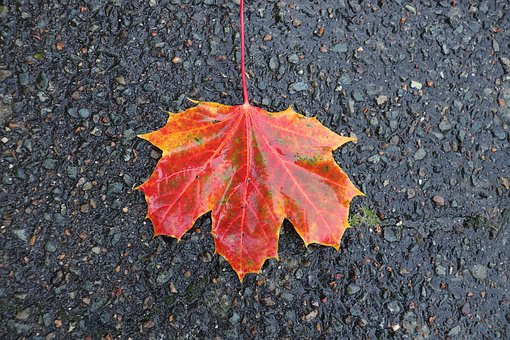 Fall, Leaf, Fall Colors, Bitumen, Road, Nature, Tree