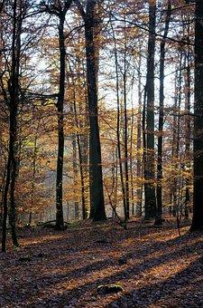 Forest, Autumn, Nature, Landscape, Trees, Mood, Light