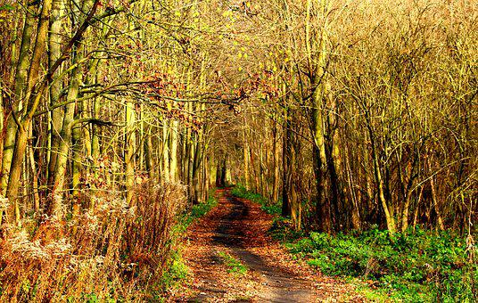 Forest, Park, Way, Landscape, Tree, The Path, Nature