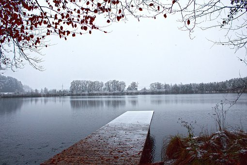 Late Autumn, Snow, Snowfall, Lake, Web, Tree, Beech