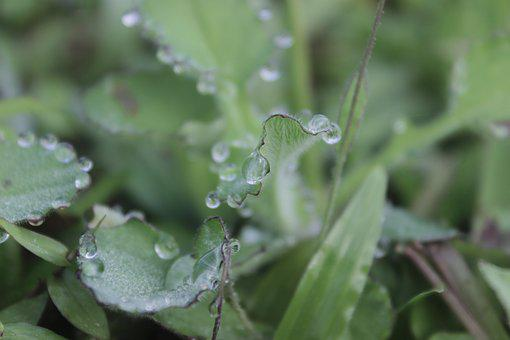 Waterdrops, Water, Leaves, Plant, Rain, Wet, Drops