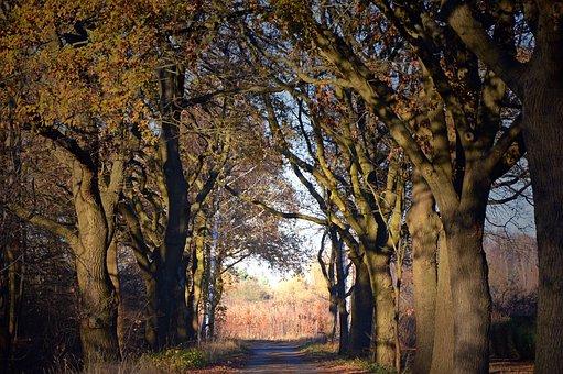 Trees, Away, Avenue, Road, Nature, Dark, Late Autumn