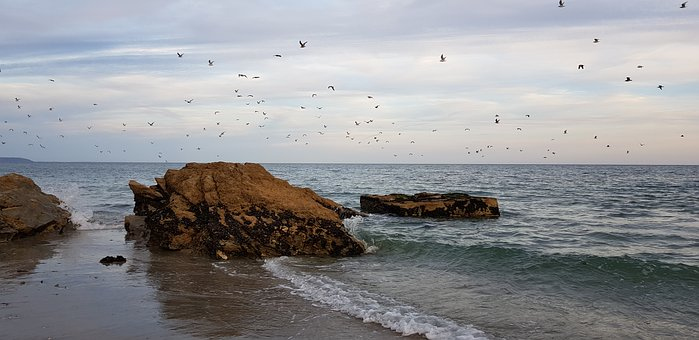 Beach, Panorama, Nature, Waves, Sea Birds