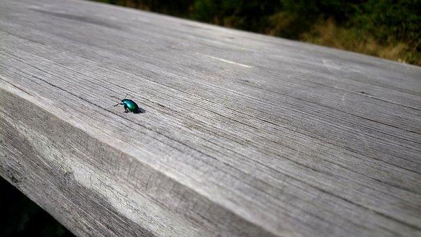 Nature, Beetle, The Beetle, Wood