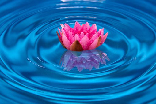 Water, Water Lily, Mirroring, Wave, Flower, Blossom
