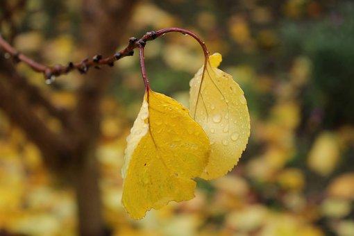 Leaves, Autumn, Branch, Water Drop, Rain, Wet, Moisture