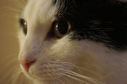 Animal, Cat, Kitten, Cat's Eyes, Cat Face, Portrait