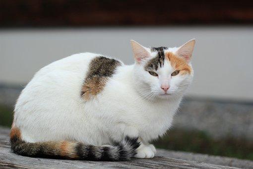 Cat, Animals, Kitten, Cat's Eyes, Domestic Cat, Wildcat