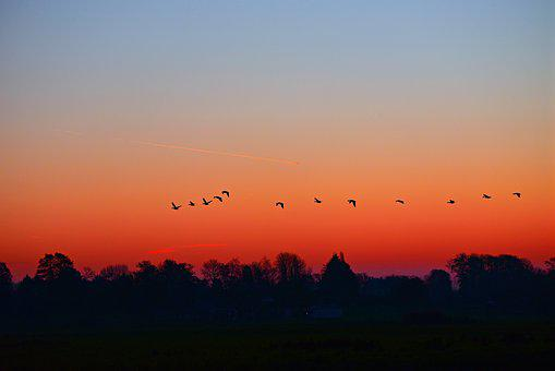 Dawn, Sunrise, Early Morning, Skies, Birds, Silhouettes