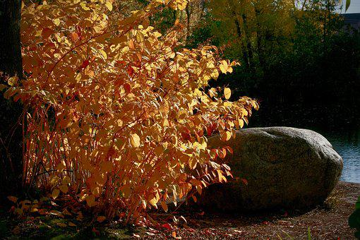 Fall Color, Fall Foliage, Yellow, Orange, Bright