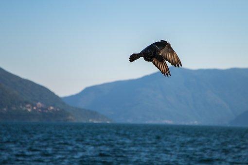 Dove, Flight, Bird, Nature, Wing, Flying, Sky, Freedom