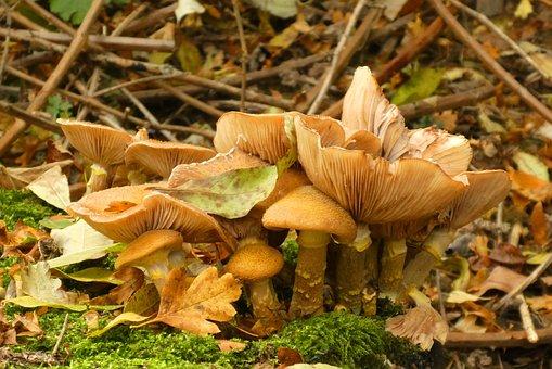 Mushrooms, Forest, Autumn, Nature, Moist, Forest Floor