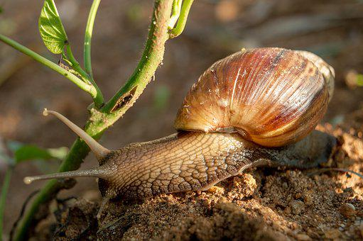Snail, Shell, Animal, Nature, Slowly, Grass, Creature