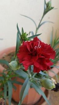 Red, Green, White, Flower, Brown, Soil