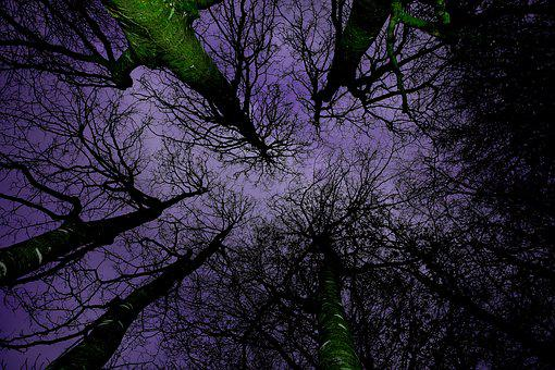 Forest, Canopy, Nature, Green, Branches, Landscape