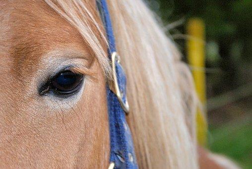 Horse, Eye, Close Up